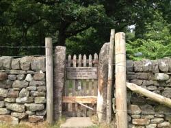 Woodland is regenerating