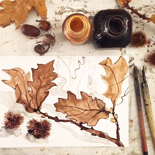 Oak leaves, acorns and chestnuts. Original drawing by Sian Hughes