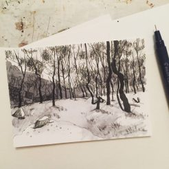 Lawrencefield birch trees, original ink drawing by Sian Hughes