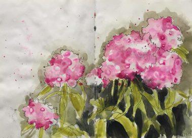 Flowers in my Sheffield garden - original sketch by Sian Hughes