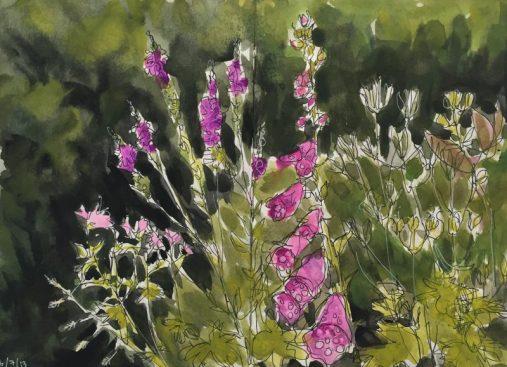 Foxgloves in my Sheffield garden - original sketch by Sian Hughes