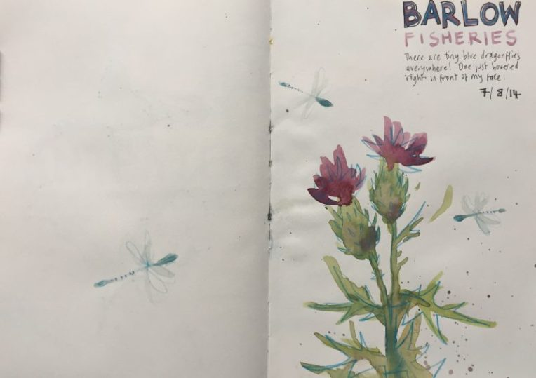 Dragonflies and thistles at Barlow fisheries, Derbyshire - sketch by Sian Hughes
