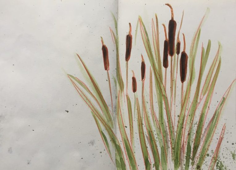 Bullrushes at Barlow fisheries, Derbyshire - sketch by Sian Hughes