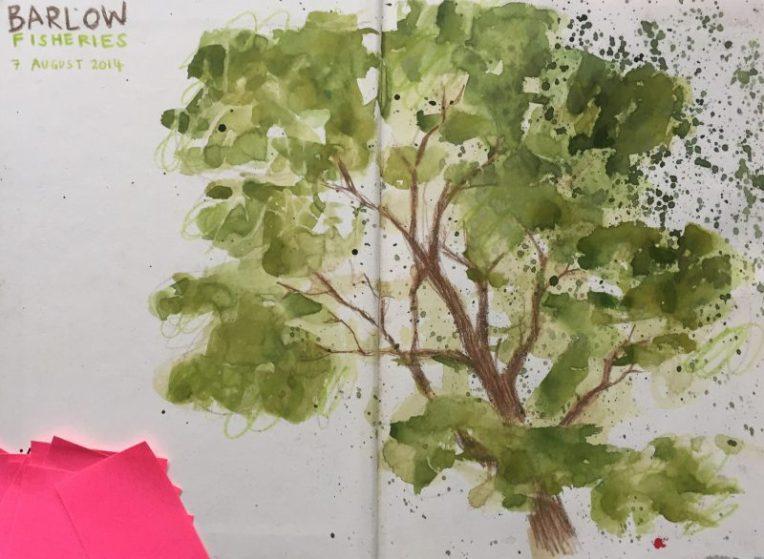 Tree at Barlow fisheries, Derbyshire - sketch by Sian Hughes