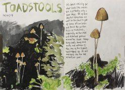 Toadstools in my Sheffield garden - original sketch by Sian Hughes