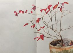 Blueberry bush in autumn - sketch by Sian Hughes