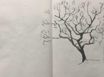 Longshaw tree, Peak District sketch by Sian Hughes