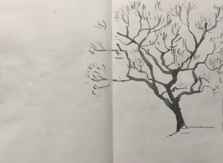 Windswept tree at Longshaw, Peak District - sketch by Sian Hughes artist