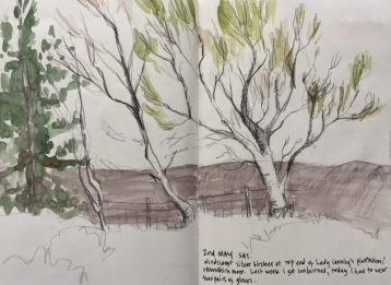 Peak district silver birches, landscape sketch by Sian Hughes