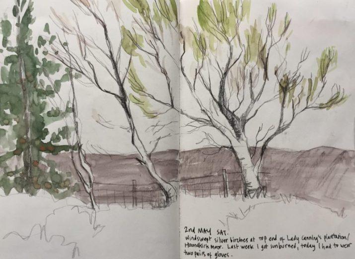 Peak district silver birches, landscape sketch by Sian Hughes
