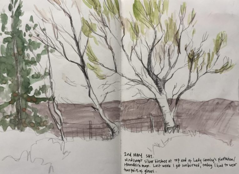 Houndkirk Moor trees sketch by Peak District artist Sian Hughes