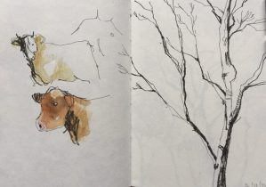 Peak district silver birch tree, sketch by Sian Hughes