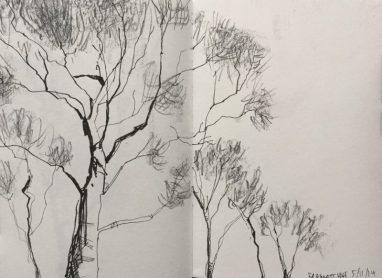 Frogatt Edge Silver Birches, Peak District Sketch by Sian Hughes