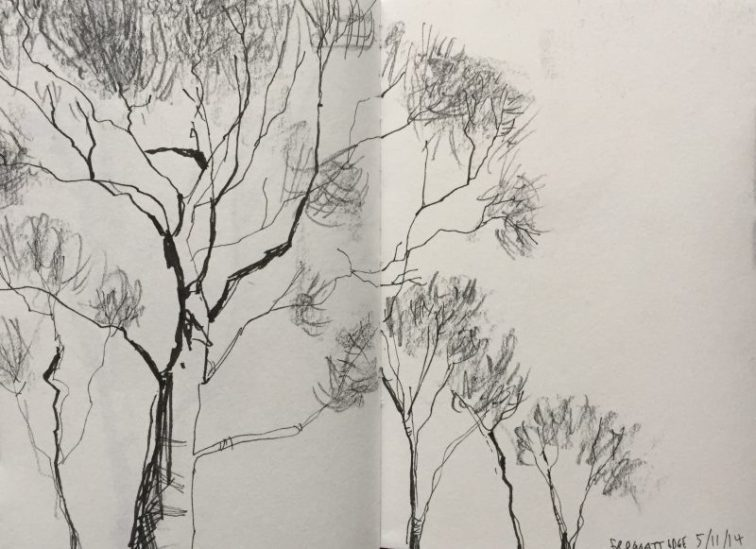 Frogatt Edge Silver Birches, Peak District Sketch by Sian Hughes
