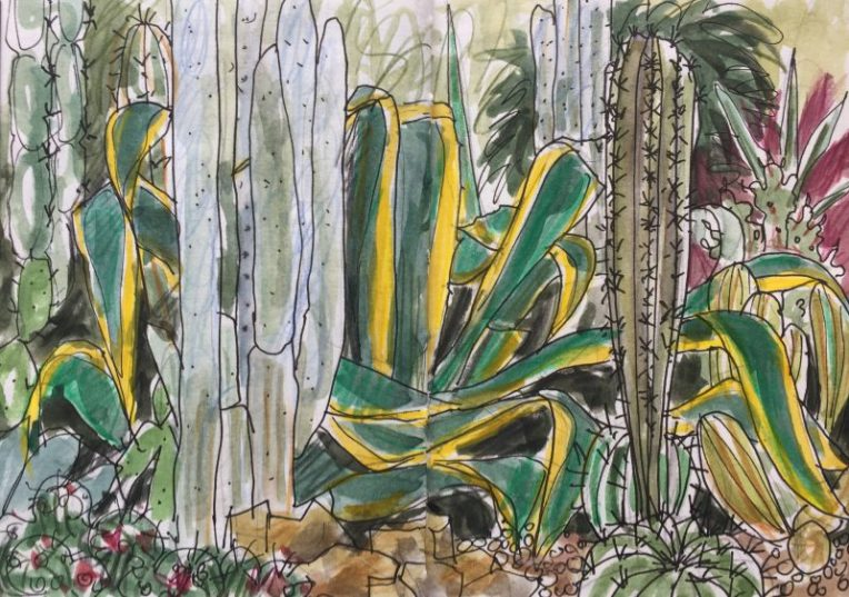 Sheffield Botanical Gardens, cacti inside the pavilions - sketch by Sian Hughes artist