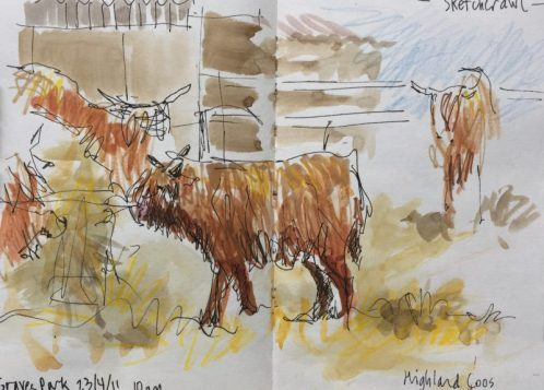 Highland Cows at Graves Park, Sheffield - sketch by Sian Hughes