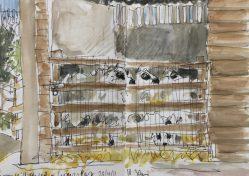 Kerry Hill sheep at Graves Park, Sheffield - sketch by Sian Hughes