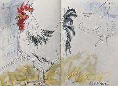 Light Sussex Cockerel at Graves Park, Sheffield - sketch by Sian Hughes