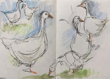 Geese at Graves Park, Sheffield - sketch by Sian Hughes
