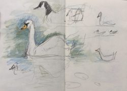Pond birds at Graves Park, Sheffield - sketch by Sian Hughes
