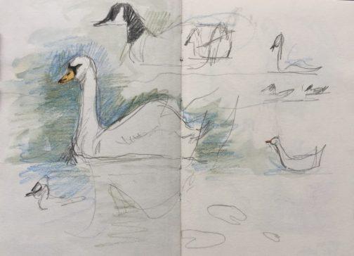Pond birds at Graves Park, Sheffield - sketch by Sian Hughes