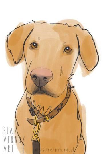 Pet portrait of fox red Labrador dog by Sian Vernon Art
