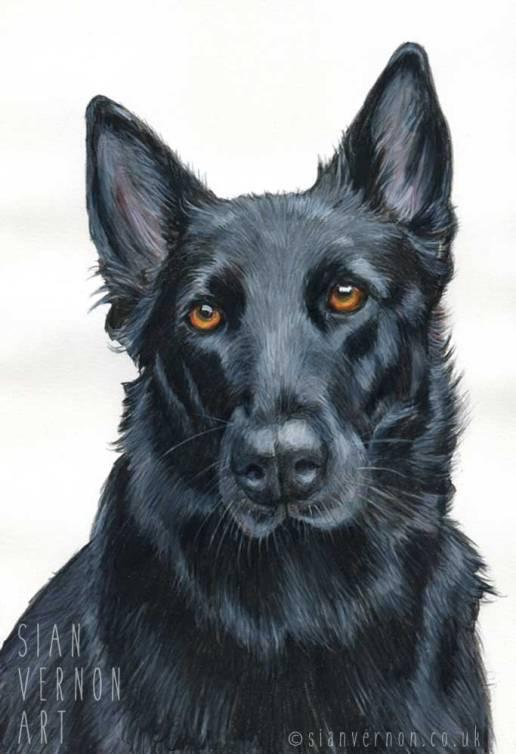 German Shepherd Dog Portrait by Sian Vernon Art