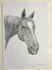 Horse drawing by Sian Vernon Art